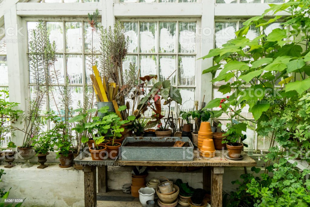 romantic idyllic plant table in the green house with old retro terracotta flower pots stock photo
