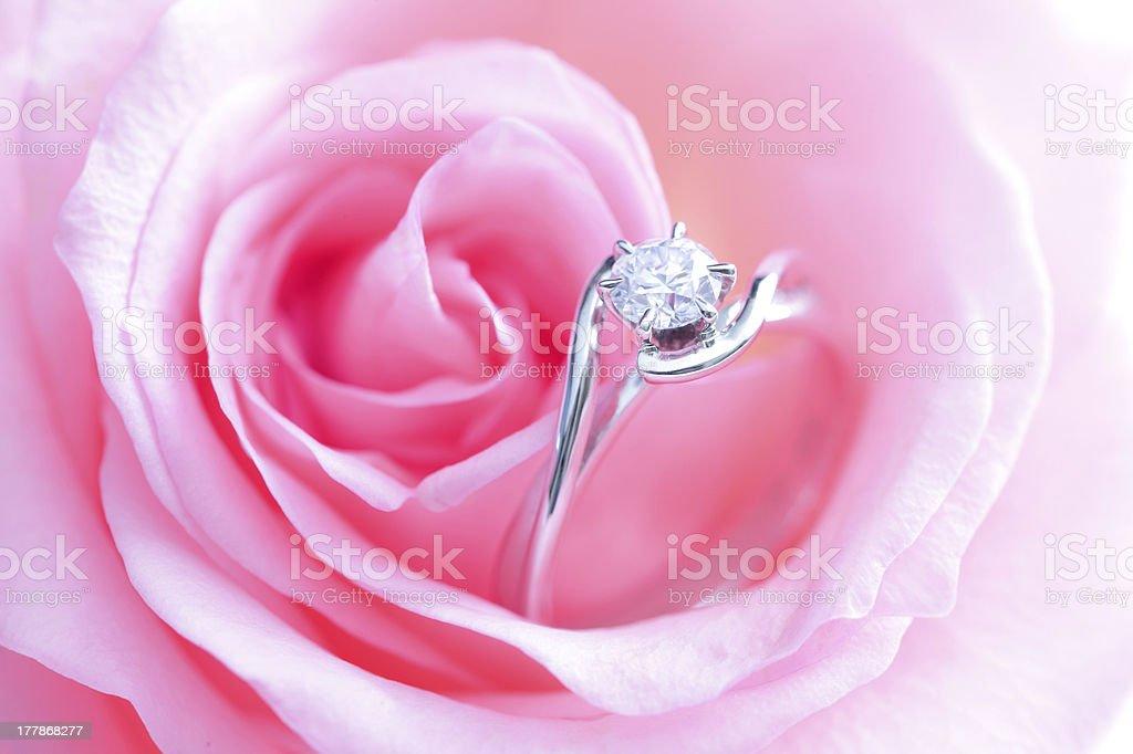 romantic Pink Rose with diamond wedding ring stock photo
