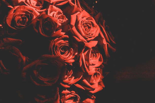 Romantische Rote Rosen – Foto