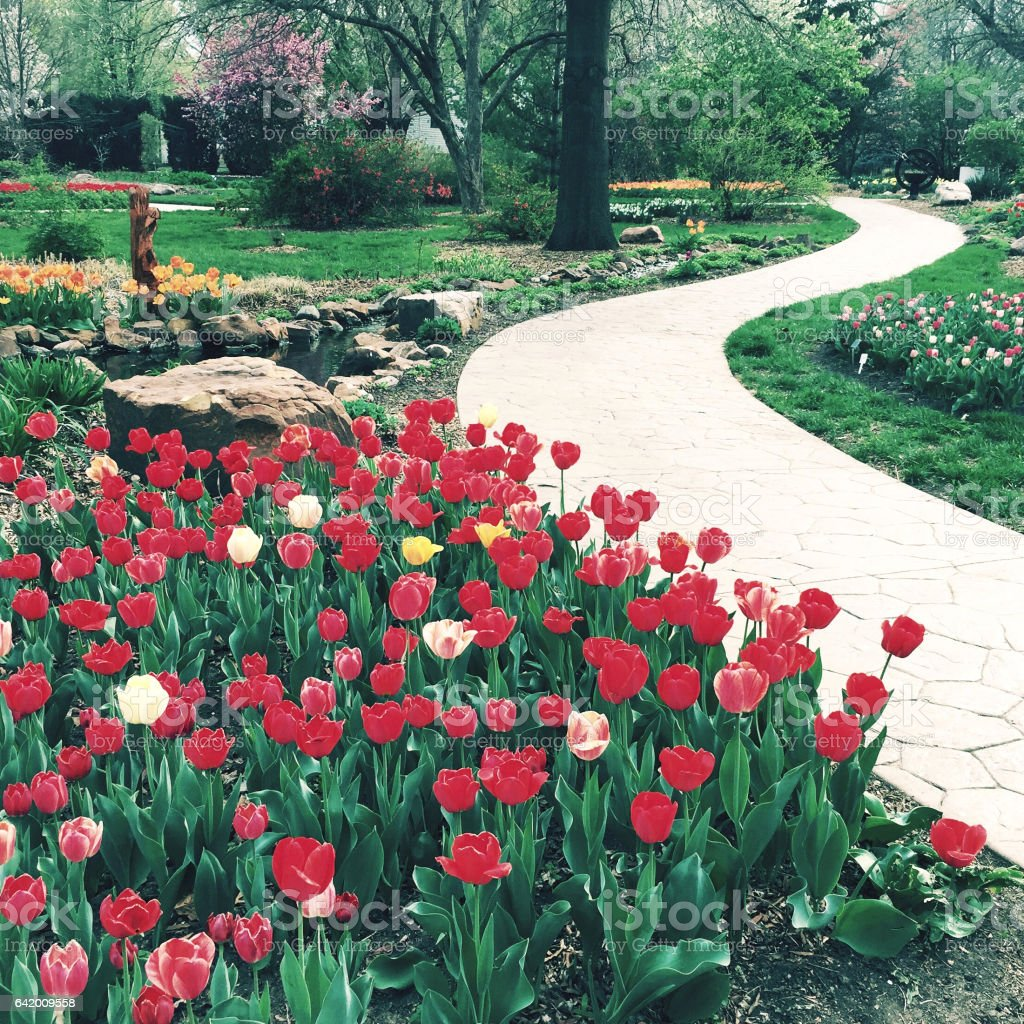 Romantic Red Tulip Park stock photo