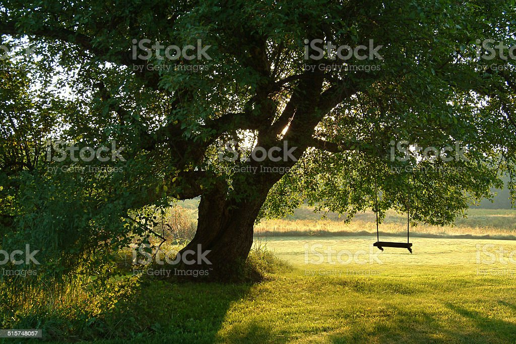sc ne romantique sur une balan oire dans un arbre photos et plus d 39 images de arbre istock. Black Bedroom Furniture Sets. Home Design Ideas