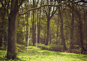 istock Romantic scene of a swing hanging from tree branch 179246303