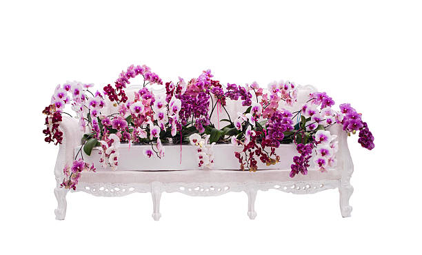 Romantic scene of mixed colored orchids on a sofa.​​​ foto
