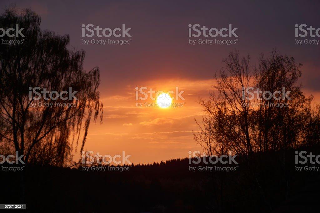 浪漫的夕陽與前景中的垂柳。 免版稅 stock photo