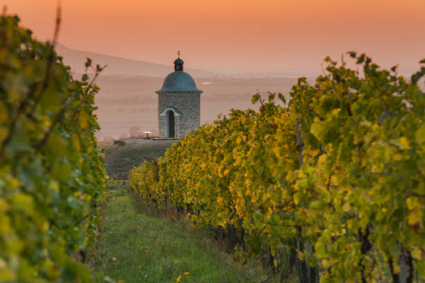 Romantic vineyards in Moravia in autumn colors at sunset Romantic vineyards in Moravia in autumn colors at sunset.. moravia stock pictures, royalty-free photos & images