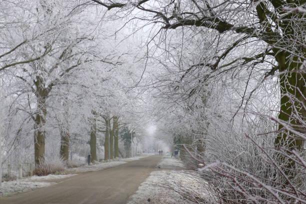 romantic walk between frozen trees in street beemster - beemster stockfoto's en -beelden