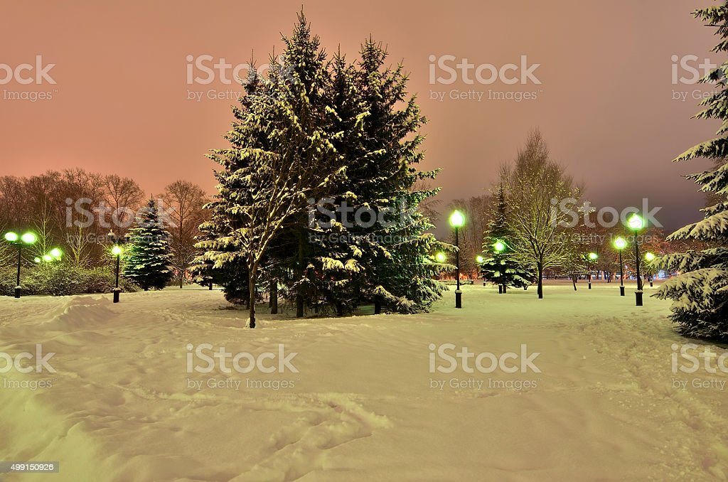Romantic walk in a winter park at night. stock photo