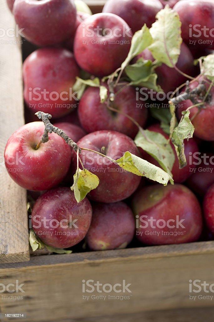 Rome Beauty apples stock photo