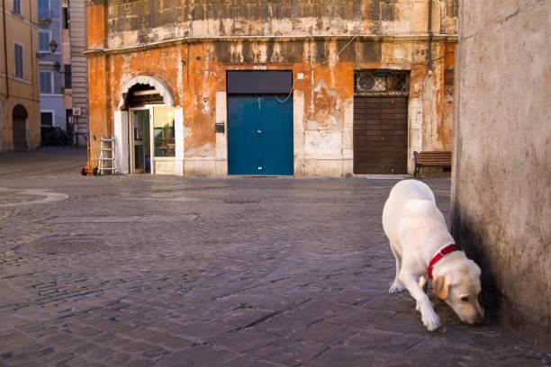 rom, italien: hund im jüdischen ghetto in der morgendämmerung - hundeplätze stock-fotos und bilder