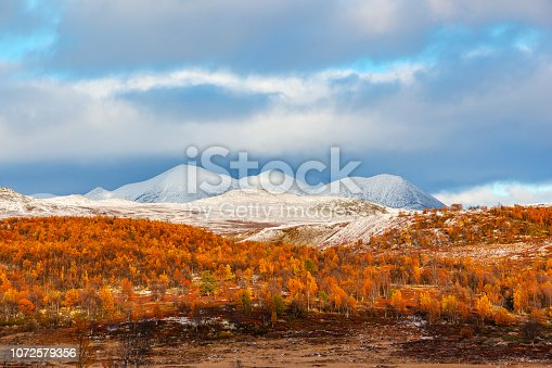 Rondane National Park with view to Smiubelgen with first snow. Typical landscape with heather and mountain birch trees in fall.