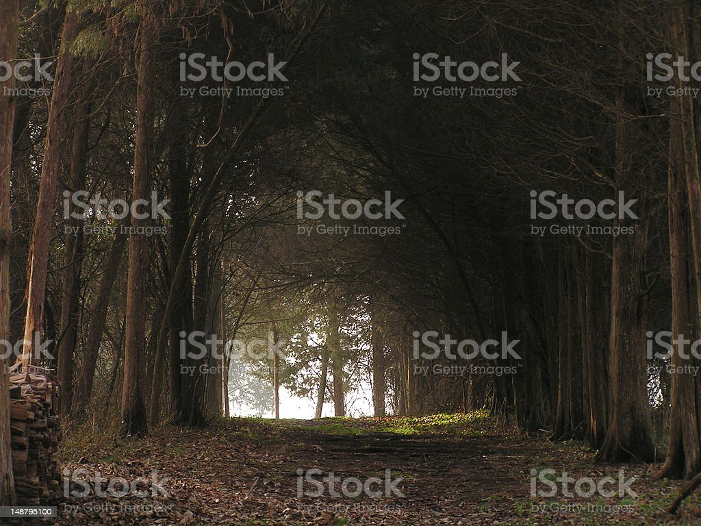 Ronnie's woods royalty-free stock photo