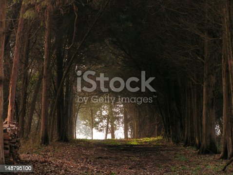 Ronnies Woods Stock Photo & More Pictures of Autumn