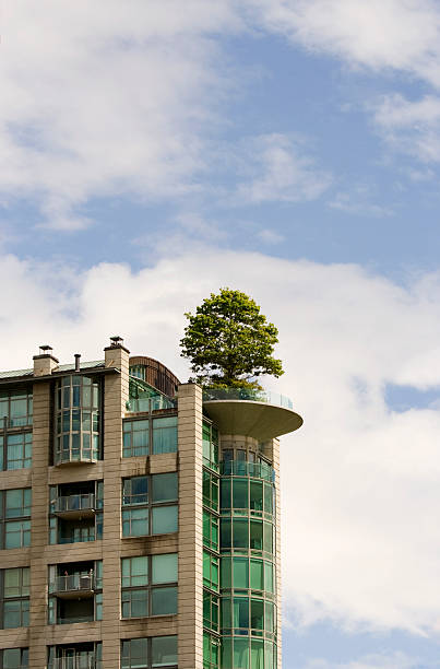 roof garden with a tree stock photo