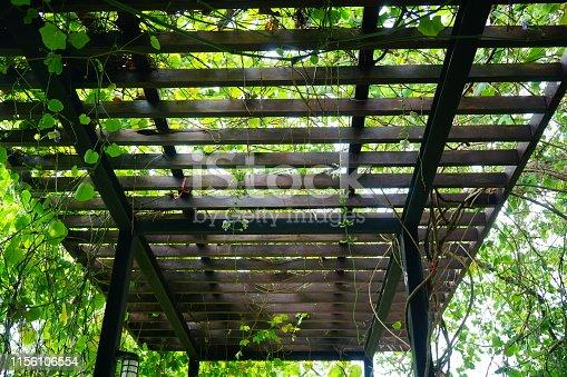 Thailand, Plant, Netherlands, Barn, Bush, Green Color