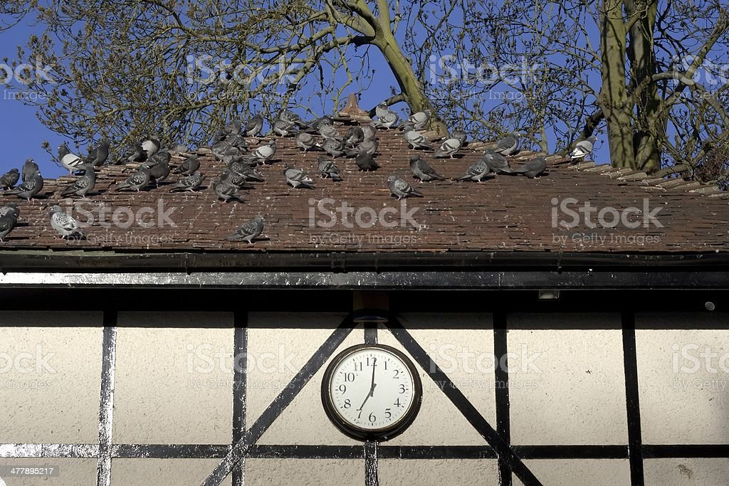 roof, pigeon and clock stock photo
