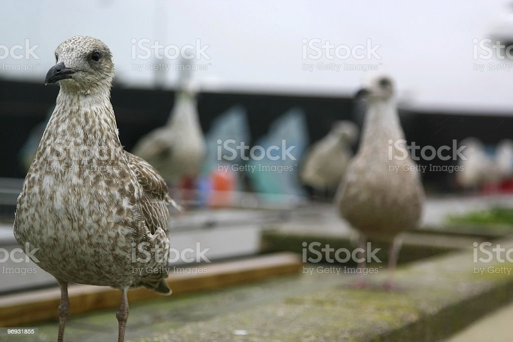 Rooftop bird royalty-free stock photo