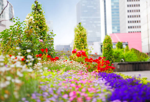 dachgärten in der stadt - dachgarten stock-fotos und bilder
