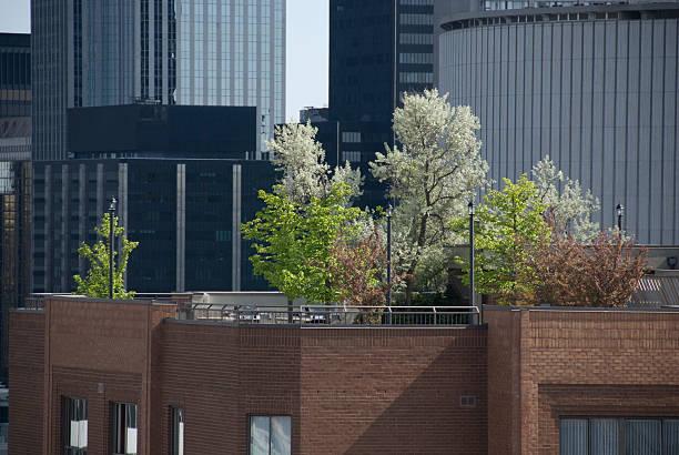 garten auf dem dach - dachgarten stock-fotos und bilder
