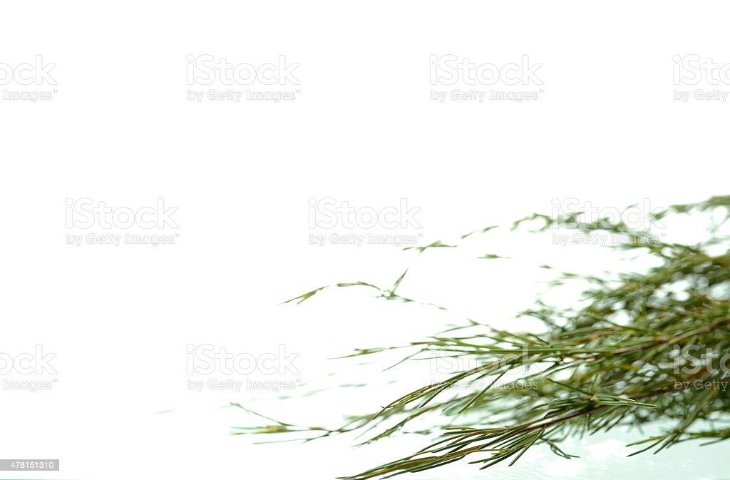 Rooibos tea leaves on white background with copy space stock photo