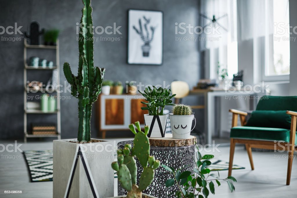 Room with cacti decorations stock photo
