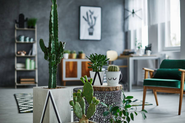 Room with cacti decorations - Photo