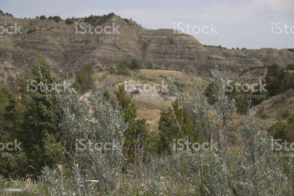 Roosevelt NP royalty-free stock photo
