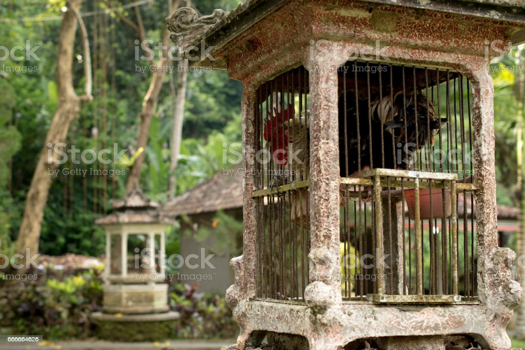 Rooster cage, Ubud Bali, Indonesia stock photo