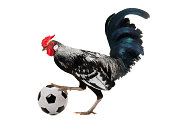 rooster with football ball isolated on white background
