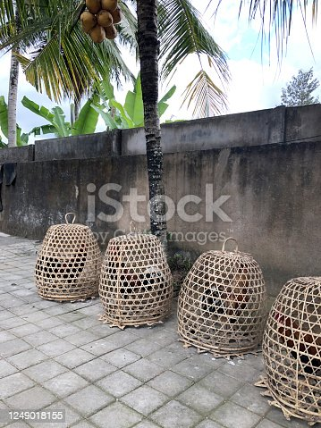 Four rooster cockerels are in hand-woven basket cages on a street in Ubud, Bali, Indonesia. Cockerels are part of a cock fighting gambling bet and Hindu traditional ceremonies in Balinese temples.
