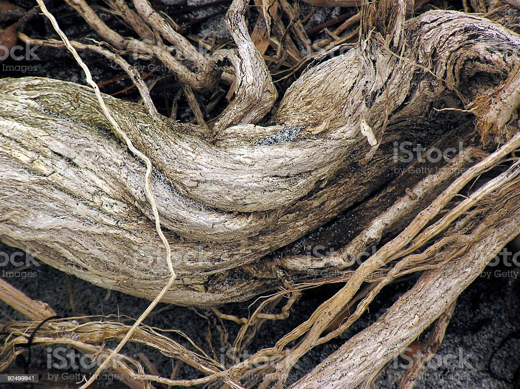 Root in Sand royalty-free stock photo