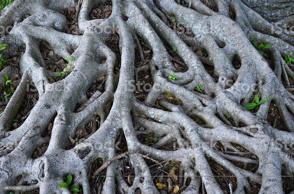 Root network stock photo