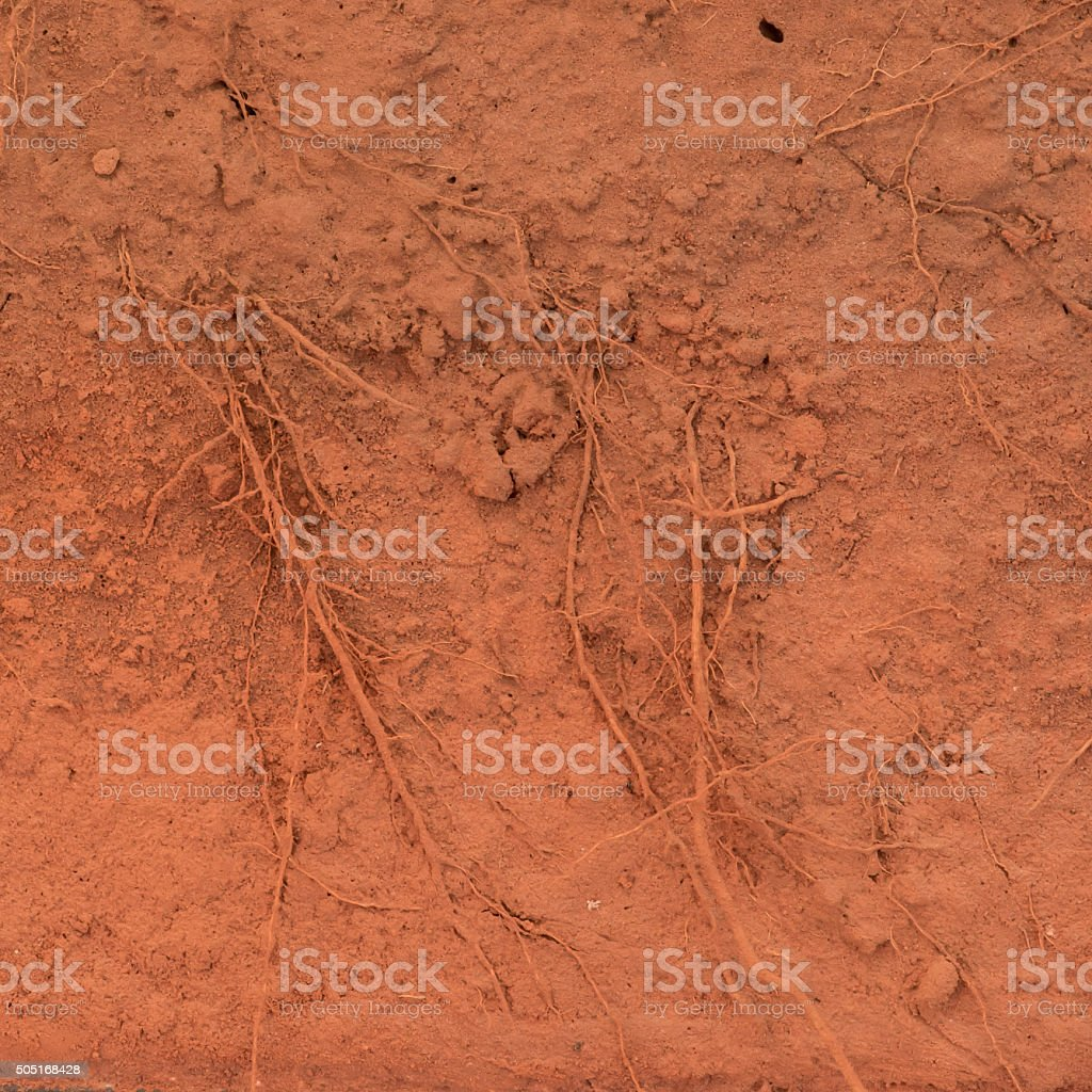 Root of the tree in the ground stock photo