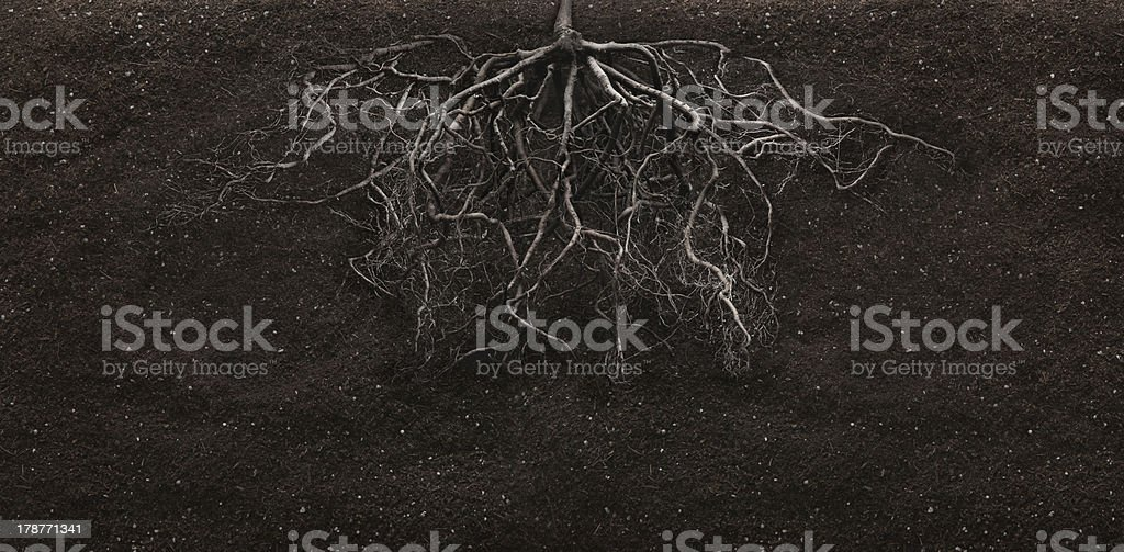 root stock photo