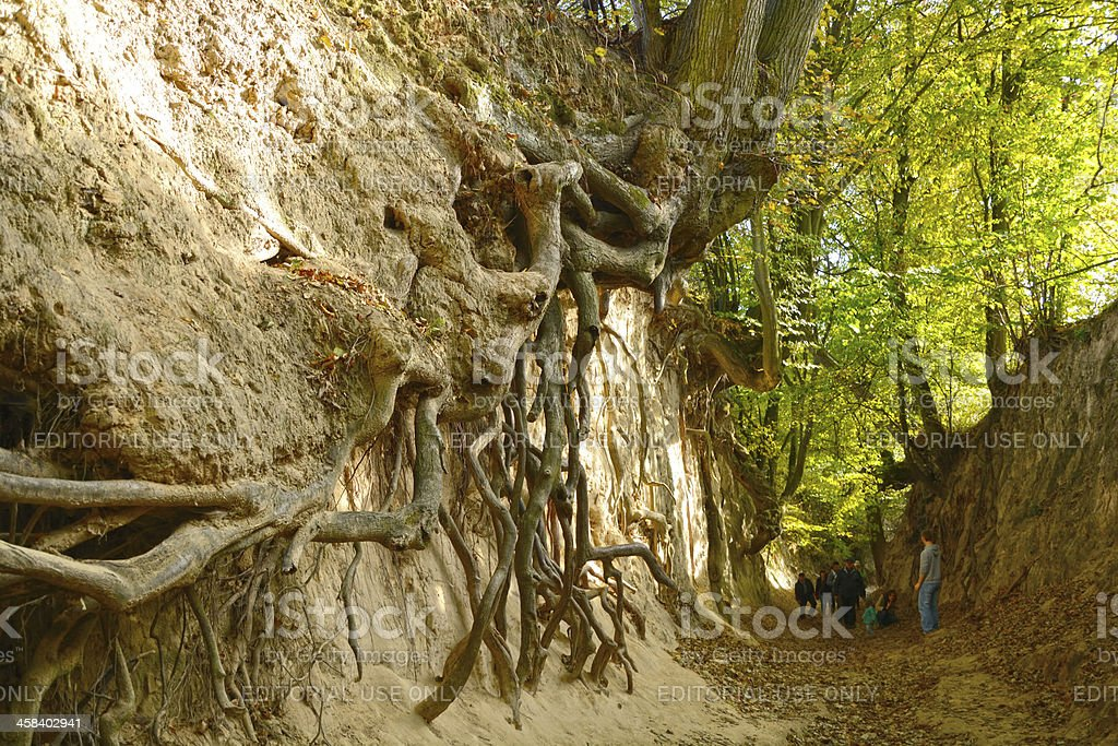 Root Ravine royalty-free stock photo