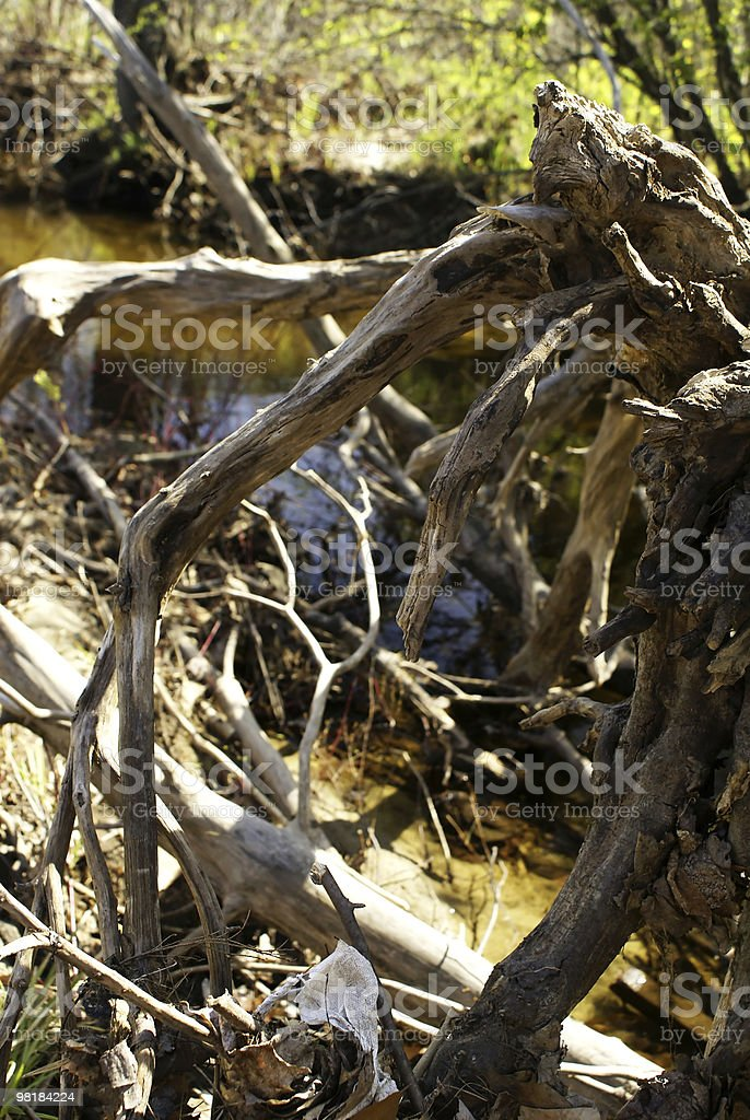 Roots Abstract royalty-free stock photo