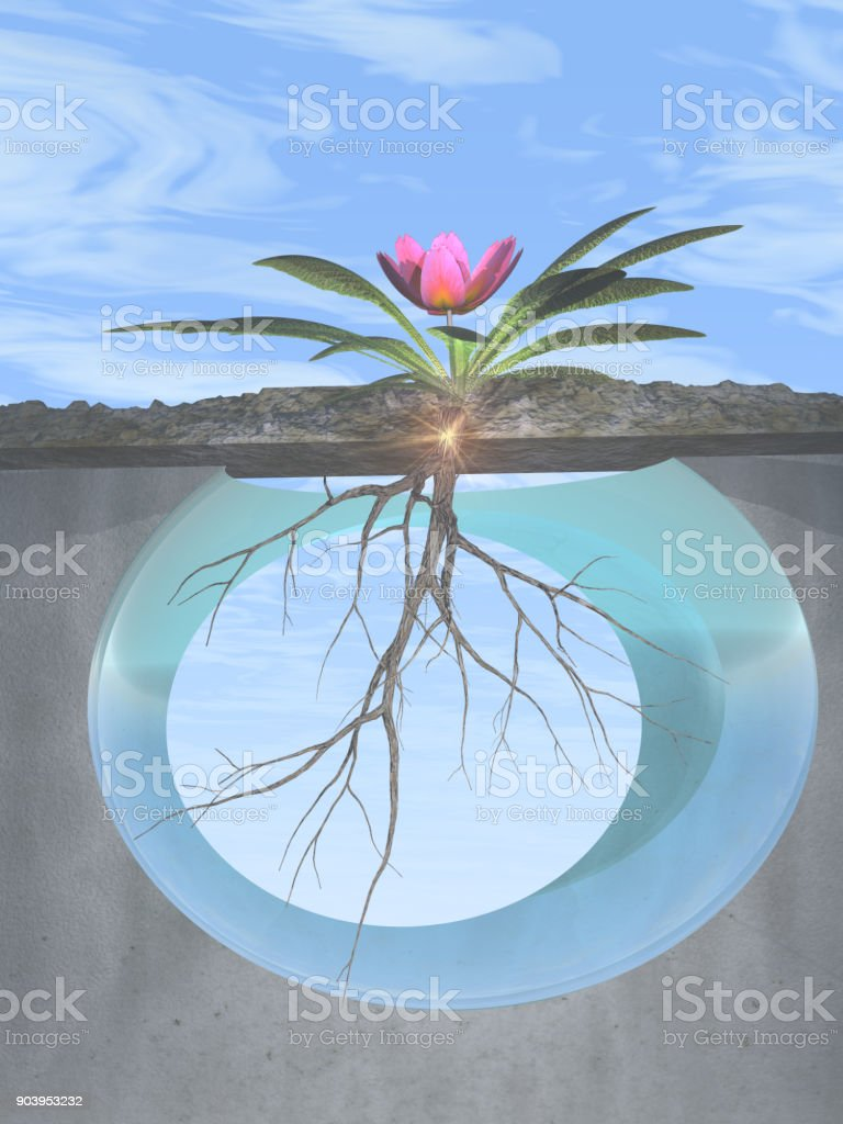 Roots and Growth stock photo