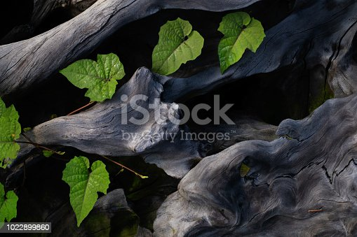 istock Roots and plants 1022899860