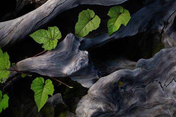 Wurzeln und Pflanzen – Foto