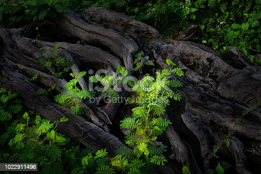 Roots and plants