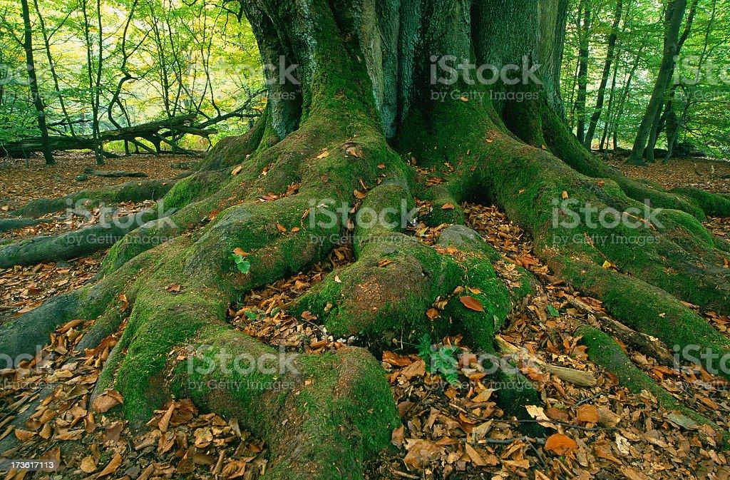 Roots II stock photo