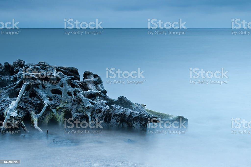 Roots sentar en el agua - foto de stock