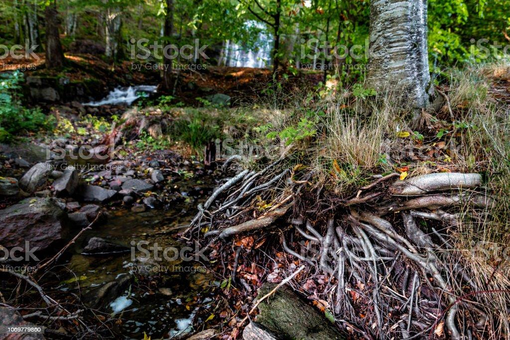 Rötterna på ett träd bildbanksfoto