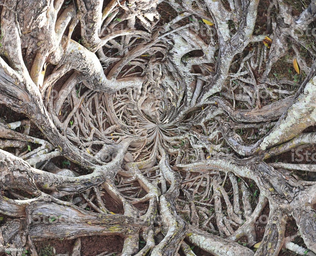 roots of big tree - Royalty-free Agricultural Field Stock Photo