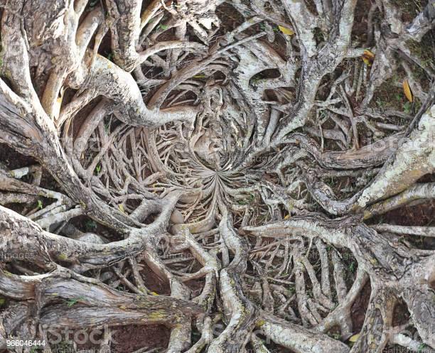 Корни Большого Дерева — стоковые фотографии и другие картинки Корень