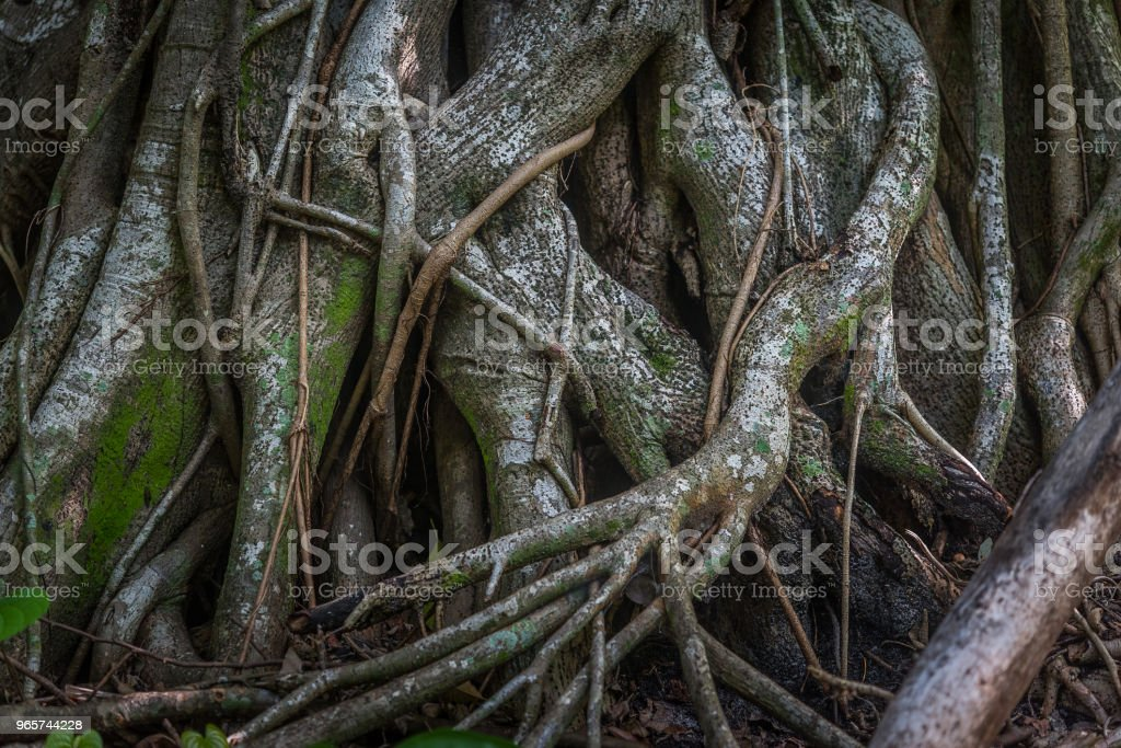 Roots - Royalty-free Aging Process Stock Photo
