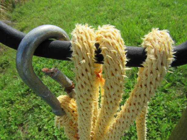 rope and hook - dianna dann narciso stock pictures, royalty-free photos & images