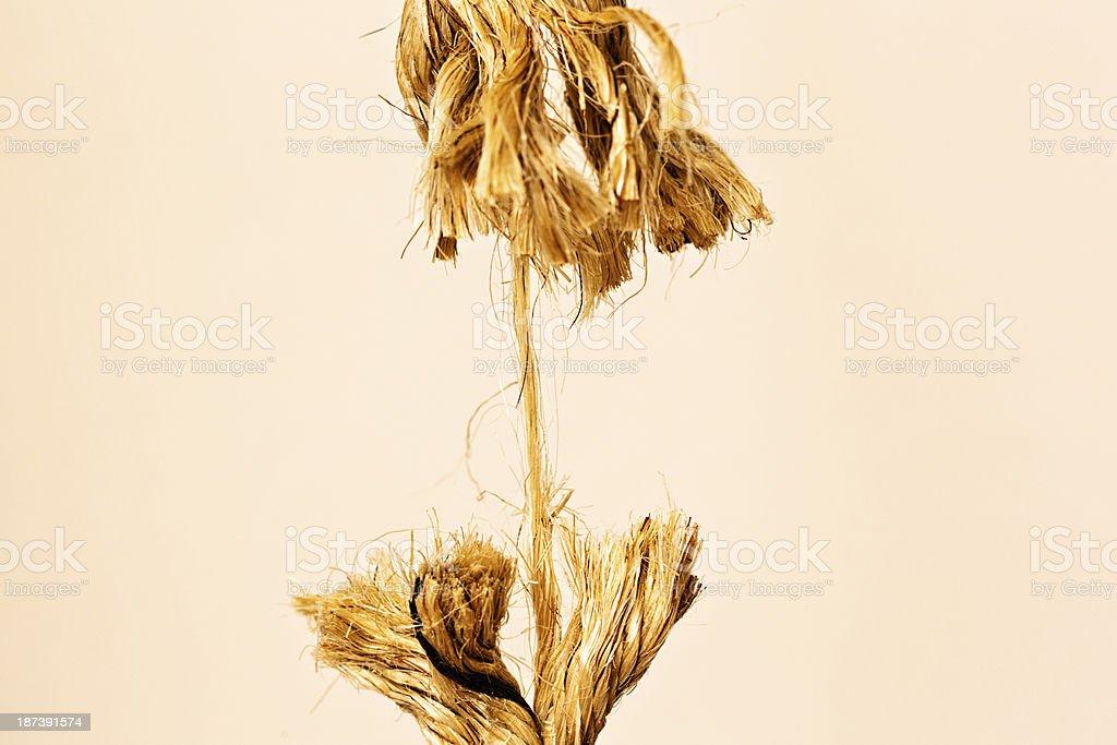 Rope frayed to its last strand symbolizing stress and urgency stock photo
