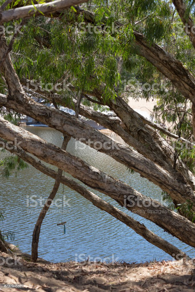 Rope swing on Malaleuca tree next to billabong royalty-free stock photo