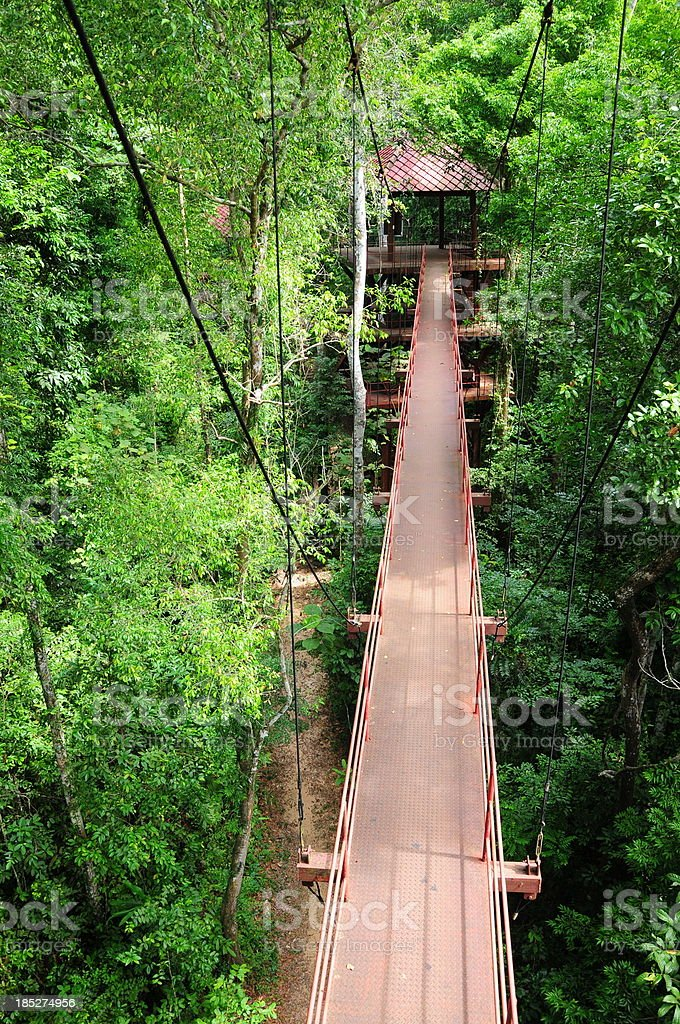 Rope walkway through the treetops in a rain forest royalty-free stock photo