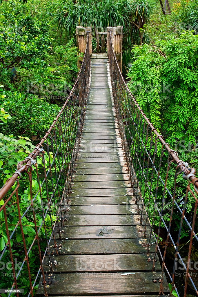 Wood Plank Walkway : A rope walkway with wood planks in the rain forest stock
